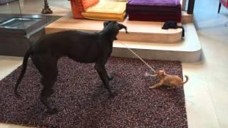 Größter Hund der Welt vs. kleinster Hund der Welt