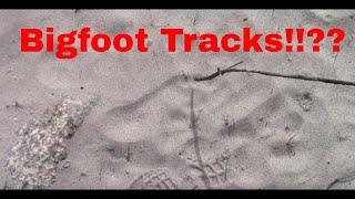 Bigfoot Tracks and Rock stacks! Upper Kings River Mar. 17 2021