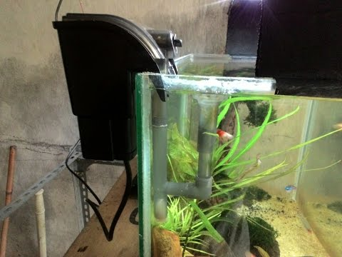 tips cara memasang skimer hang on aquascape agar mengikuti level air