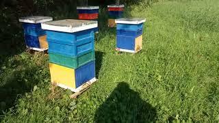 Beekeeping. Подсолнух 2018 г.