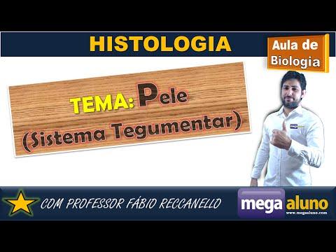 Tecido Epitelial -Pele e seus receptores sensorias (megaaluno.com)