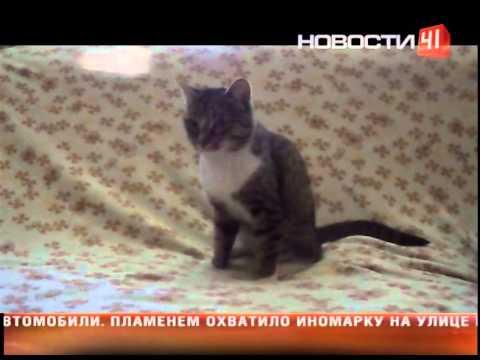 Кот вдали от дома находит обратный путь