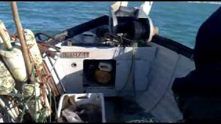 Cod fishing with sovereign boats  hauler on Sea King SM40