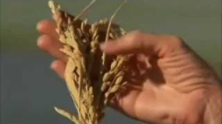 Northern California Rice Farm - America's Heartland