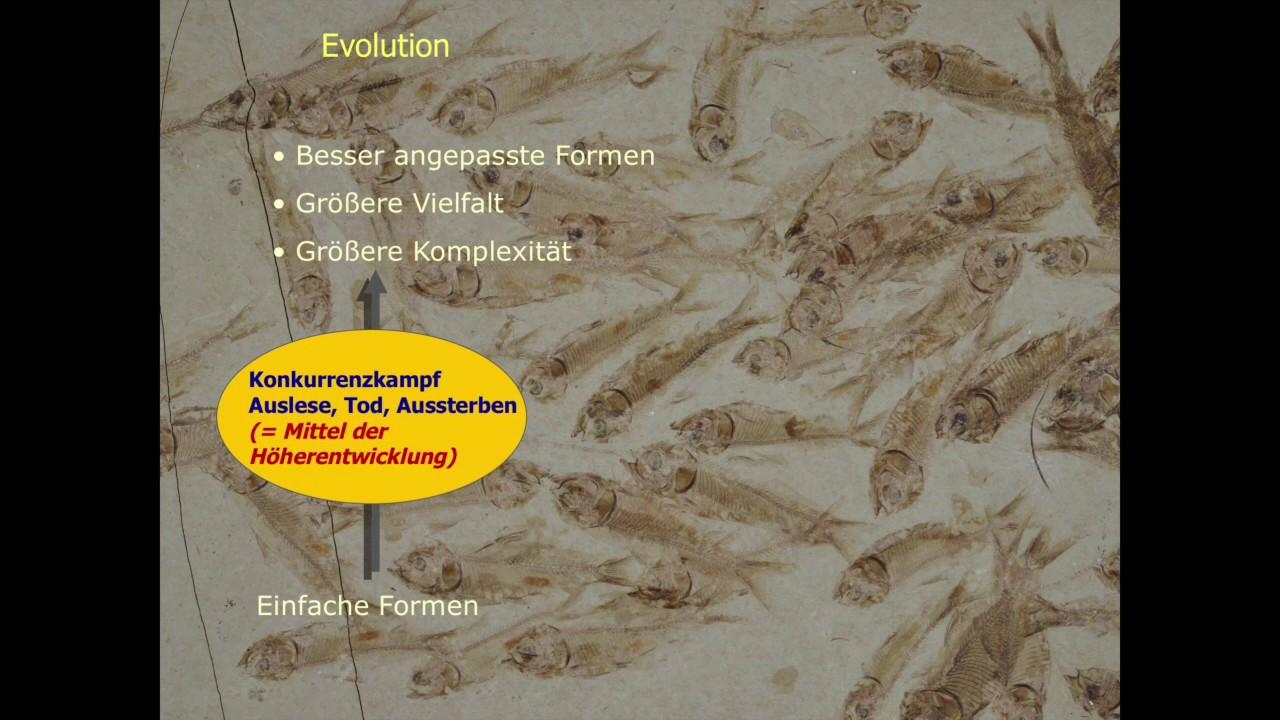 Schöpfung und Evolution - Widerspruch oder Ergänzung - Dr. Stefan Drüeke (April 2016)