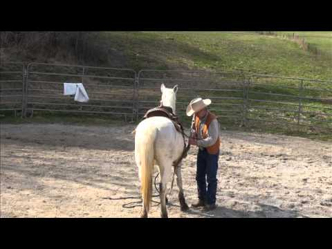 Barn sour and ground work - YouTube