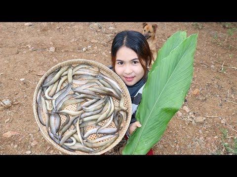 Awesome Cooking Peacock eel With Recipe delicious – Cook Fish Recipes – Village Food Factory
