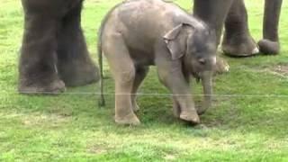 Elefantenbaby trainiert Rüssel