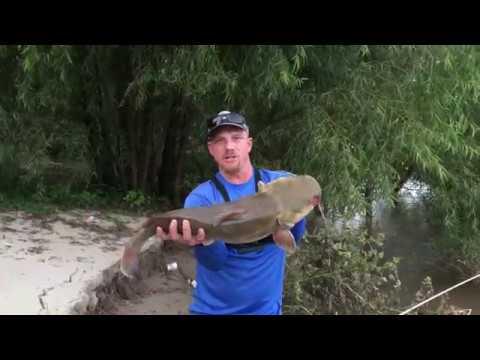 Mighty Mississippi River Catfish (Baton Rouge)