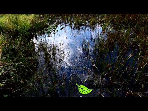 Dreamer In Nature (Ottawa) Part 1
