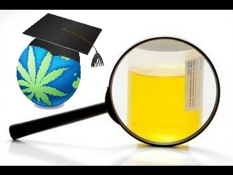How To Urine Test For Thc Cannabis