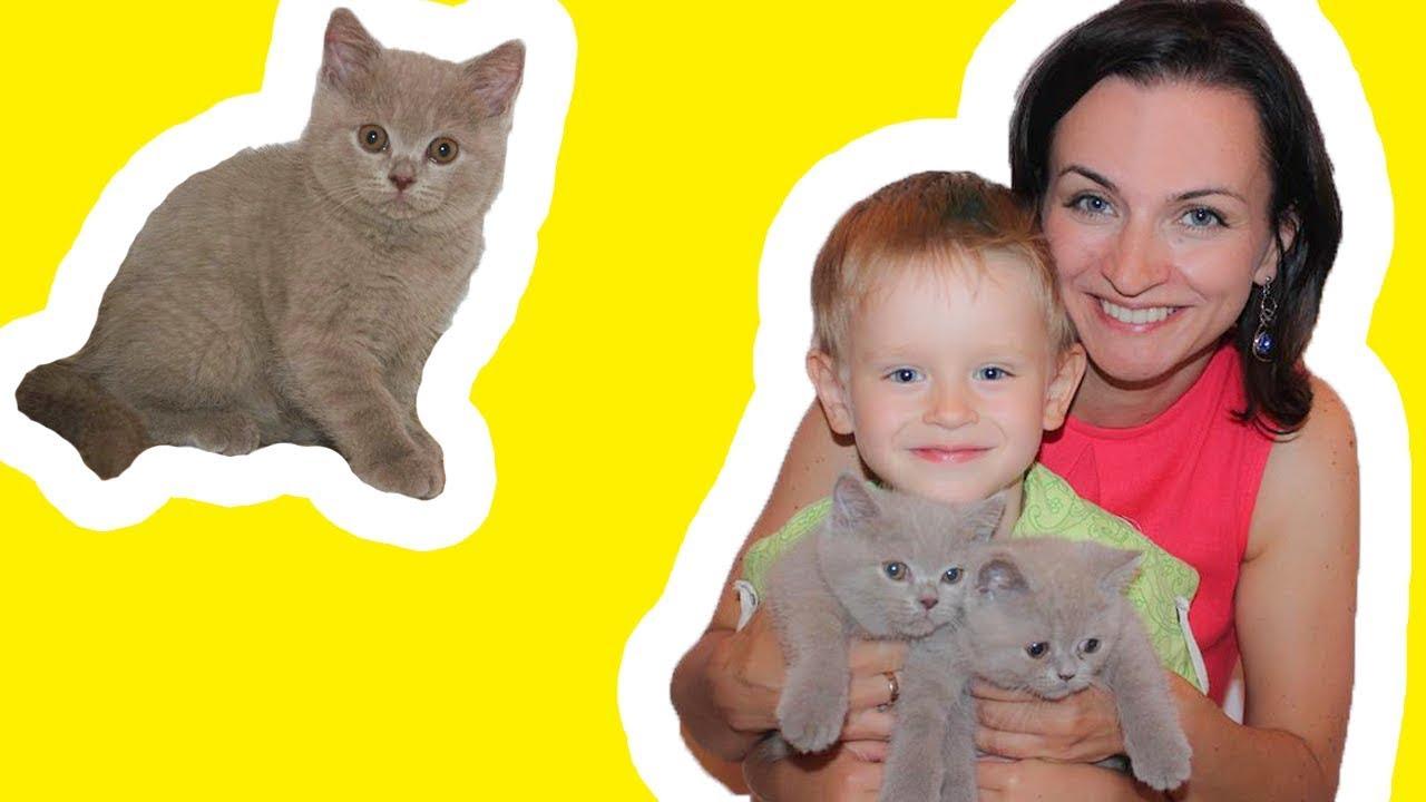 Британские Котята играют в Домике Няшные Котики видео про животных для детей и всей семьи Кошкин дом