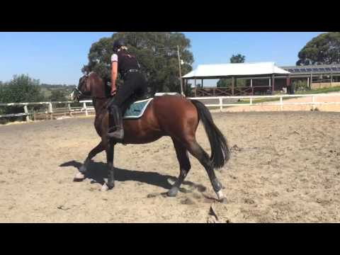 Chilean express cavaletti schooling