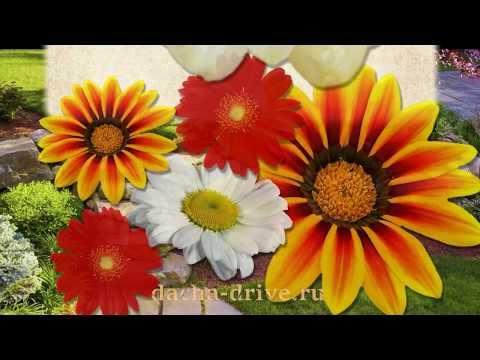 Многолетние цветы названия, описание, фото