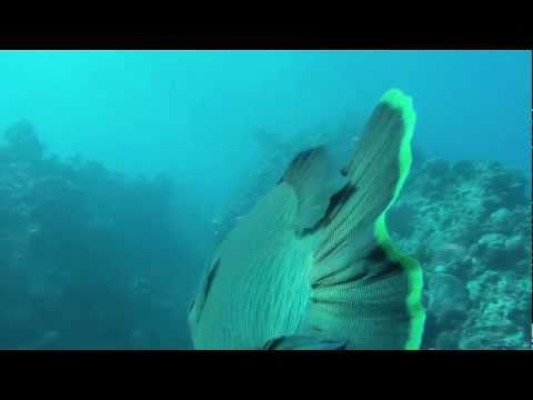 Diving On Bait Reef, Whitsundays