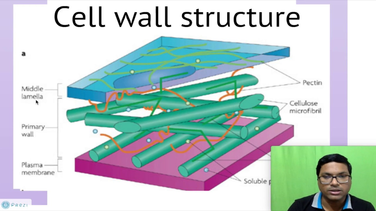 how is the structure of cells Structure & function of plant & animal cells created with cast's udl book builder history of the cell the cell:-is the basic unit of organisms.