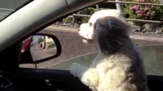 Elli Pirelli im Auto