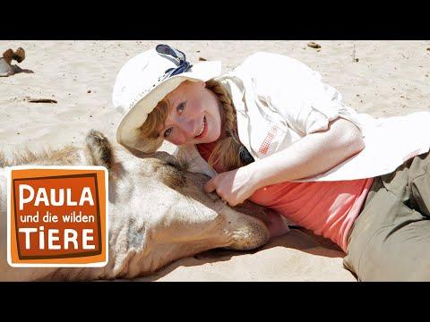 Ein Kamel zum kuscheln (Doku) | Reportage für Kinder | Paula und die wilden Tiere
