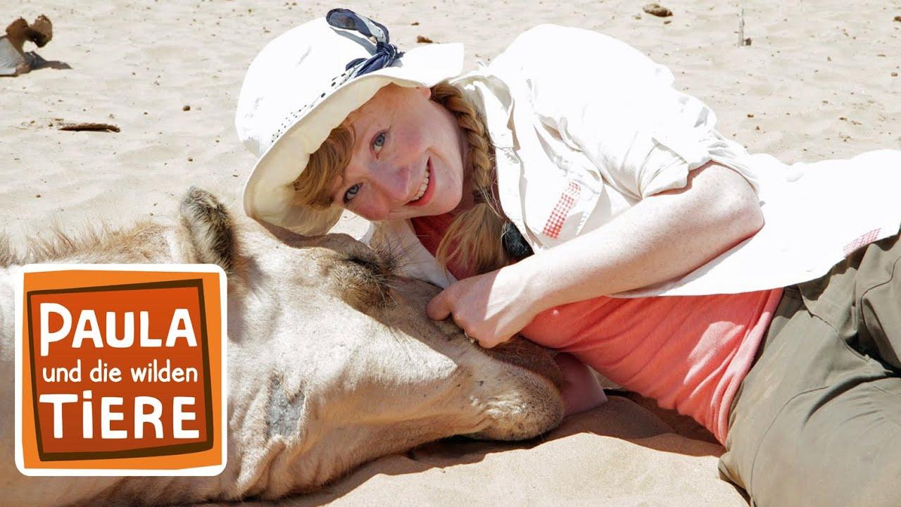 Ein Kamel Zum Kuscheln Doku Reportage Fur Kinder Paula Und Die Wilden Tiere Youtube