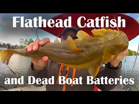 Giant catfish found dead from YouTube · High Definition · Duration:  1 minutes 10 seconds  · 282 views · uploaded on 3/16/2014 · uploaded by HuNt & FiSh