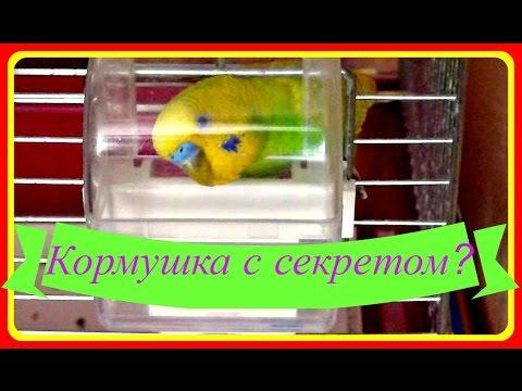 Кормушка с секретом//Интересная кормушка для попугая//Птицы