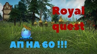 Royal Quest - АП Креста на 60 ЛВЛ/ОДЕВАЕМ НОВЫЙ ШМОТ