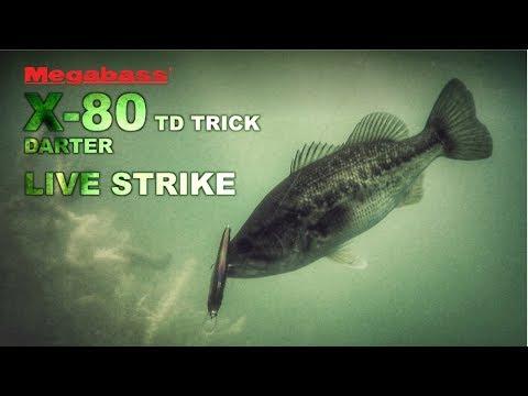 Download Youtube: Bass LIVE STRIKE on the Megabass X-80 Trick Darter Jerkbait