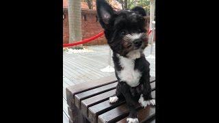 這隻長的很像花田一路裡養的狗,牠叫花田二露,現在長大了! 現在很喜愛這影片內的可頌麵包布偶。 影片中牠需要咬著布偶牠才可以去睡覺;現在...