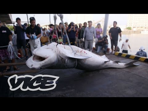 The Shark Hunters Of Japan  (Part 1/2)