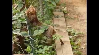 Бенгальские котята - чудо котики