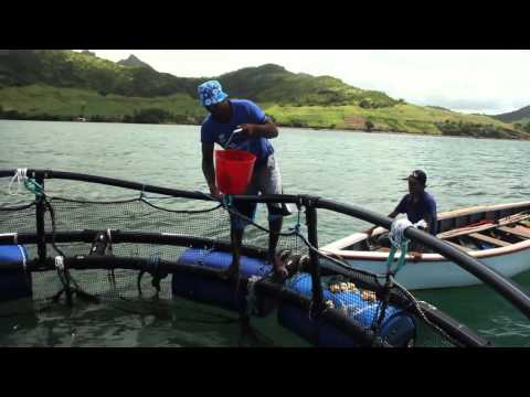 Cage Construction, GMP And Value Addition In The Small Scale Mariculture Sector