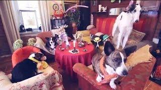 Як живуть собаки знаменитостей