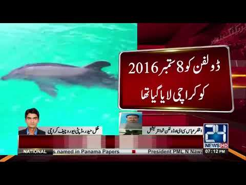 Wildlife department issue notice to Dolphin show international over Dolphin missing issue