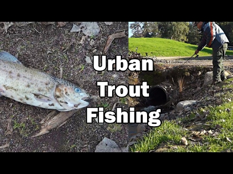 Jumbo Stocked Trout Fishing Surprise! Woodward Park