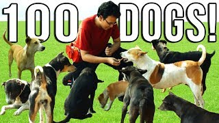 FEEDING 100 DOGS IN A DAY! 🐶 Indian Stray Dogs 2018