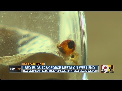 Cincinnati's bed bugs are out of control