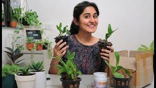 Unboxing Orchids + Preparing Potting mix
