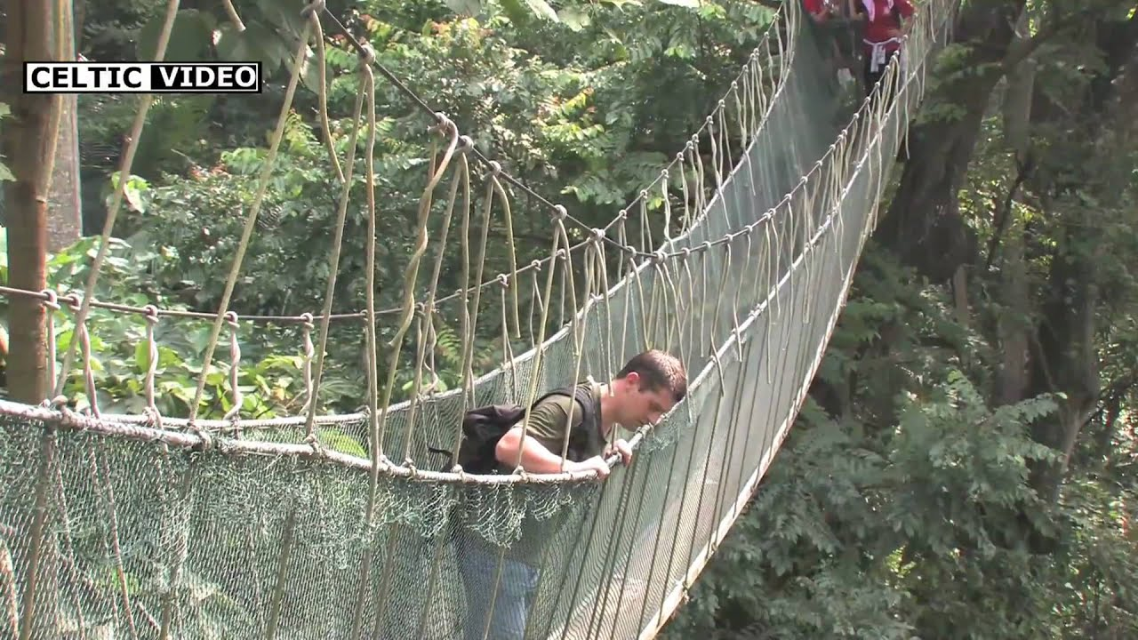 & FRIM canopy walk - YouTube