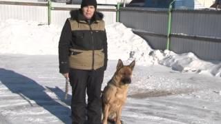 Домашний зоопарк: Восточноевропейская овчарка