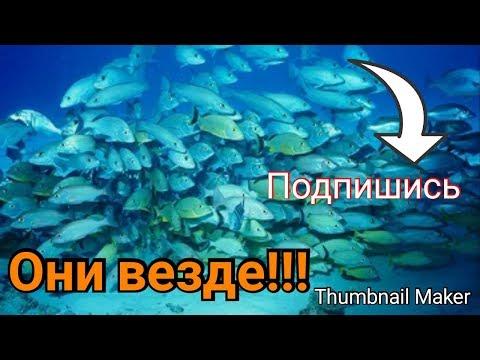 """Рыбы везде в городе Бобруйске на озере ,,Шаманка"""""""