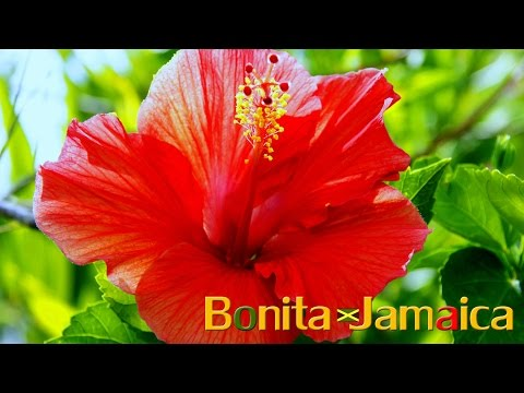 Pretty Floral Flavors Of Jamaica