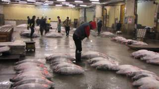 Tokyo, Tsukiji Fish Market and the famous Tuna Auction
