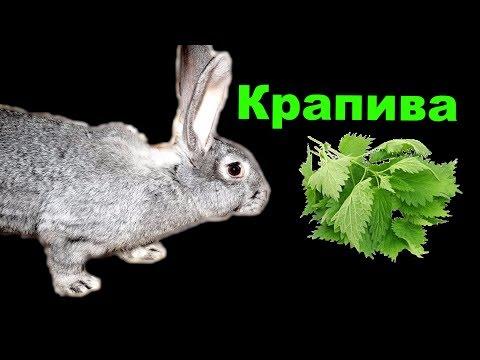 Можно ли кроликам крапиву | КРОЛИКОВОДСТВО