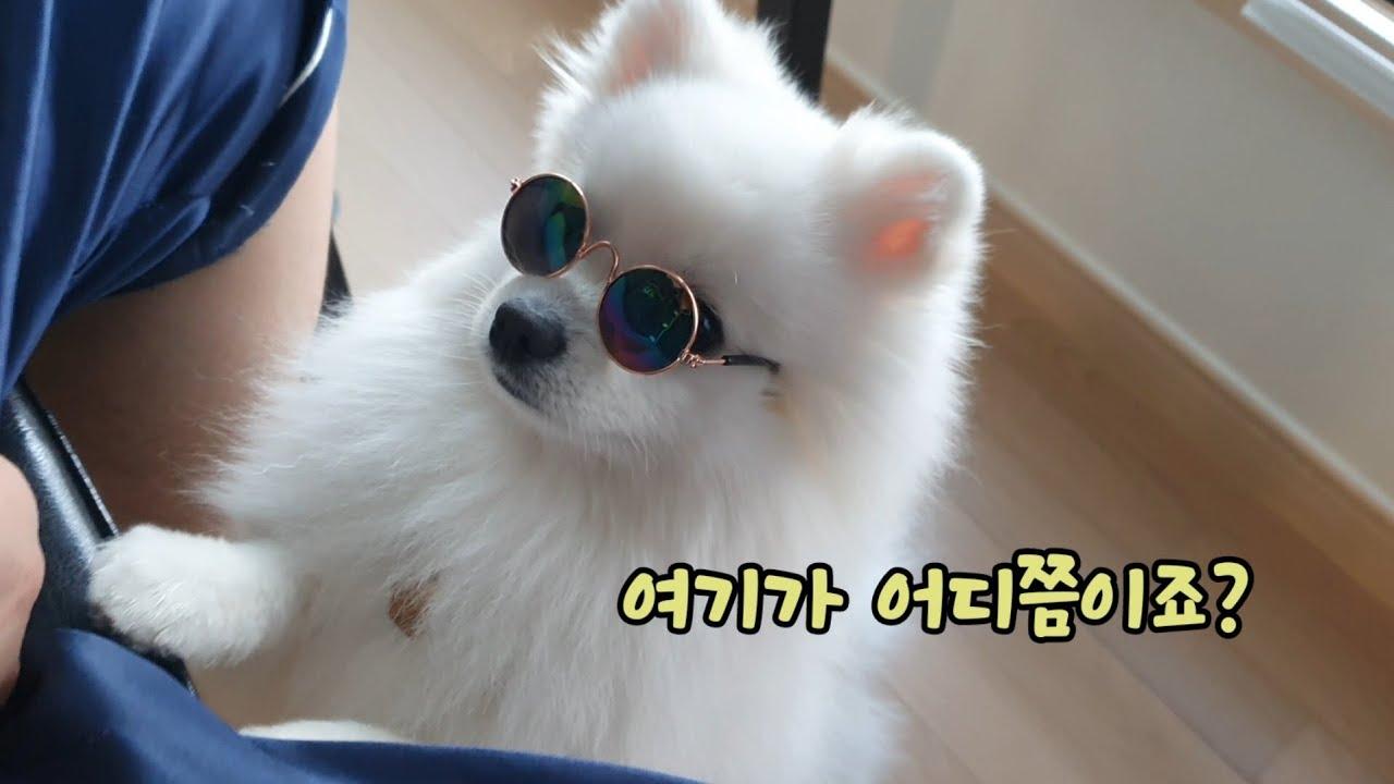 시선강탈  강아지 🐶