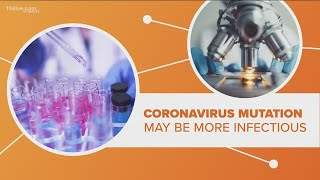 Here is the connection between the mutated strain of the coronavirus and contagion levels