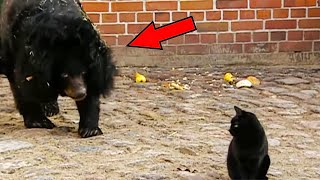 В клетку к медведице забежала кошка.  Дальше случилось невероятное…