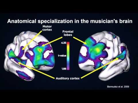 Our Musical Brain - Robert Zatorre on Musical Processing in the Brain