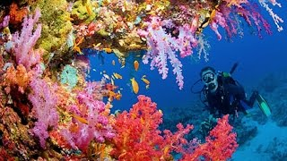 UNDERWATER LONG NATURE MEDITATION WITH CORAL REEF