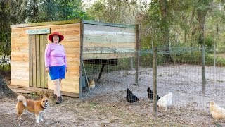 Inside A Chicken Coop: How many chickens can I have?