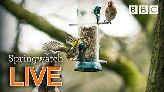 Cute wildlife cams 8 June  🐦🐿 🦆 | BBC Springwatch